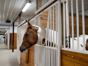 Spacious indoor stalls and well lit